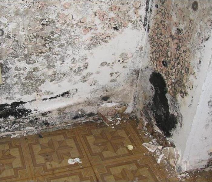 Mold Remediation Baldwin County Residents: Follow These Mold Safety Tips If You Suspect Mold